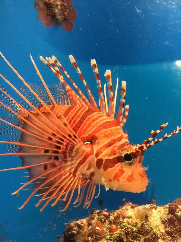 オレンジ魚